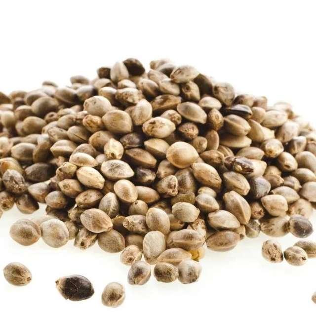 Семена конопли для проращивания Украина. Купить. Магазин натуральные продукты ЯТНА